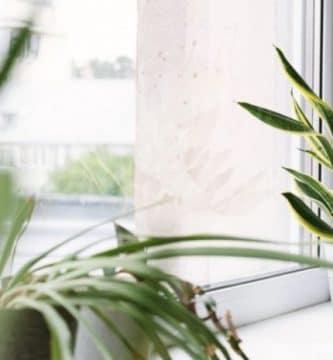 mejores plantas para tu casa segun la NASA